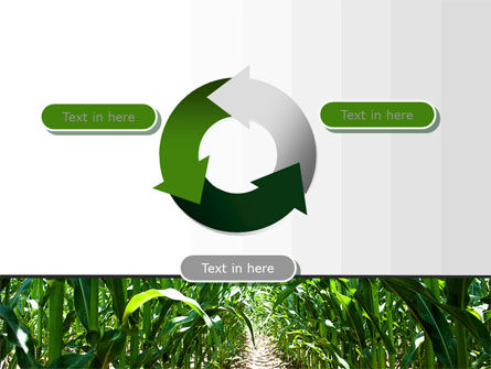 Corn Field PowerPoint Template Slide 9