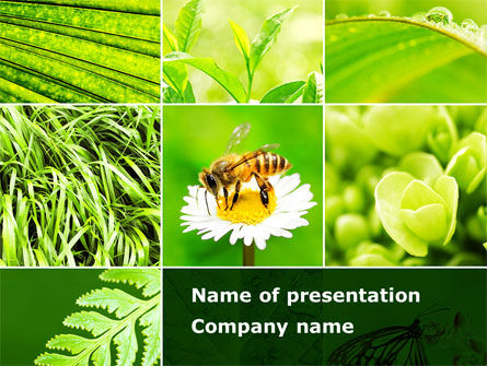 Bee On A Flower Collage PowerPoint Template, 09915, Agriculture — PoweredTemplate.com