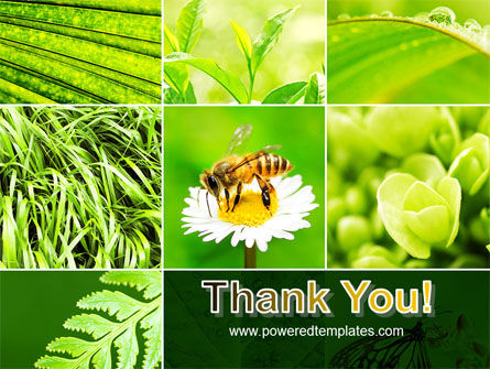 Bee On A Flower Collage PowerPoint Template Slide 20