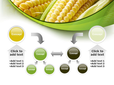 New Crop Of Maize PowerPoint Template Slide 19