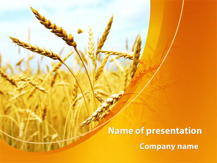 Golden Ear Of The Wheat PowerPoint Template, 09936, Agriculture — PoweredTemplate.com