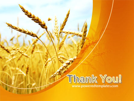 Golden Ear Of The Wheat PowerPoint Template Slide 20
