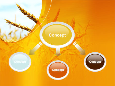 Golden Ear Of The Wheat PowerPoint Template, Slide 4, 09936, Agriculture — PoweredTemplate.com