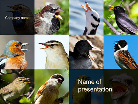 Birds PowerPoint Template, 10528, Education & Training — PoweredTemplate.com
