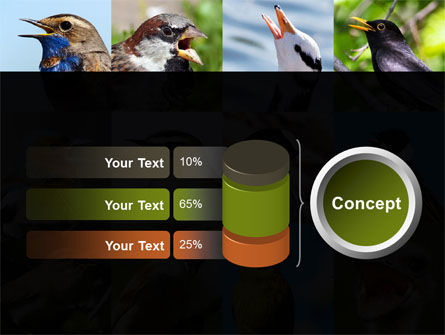 Birds PowerPoint Template Slide 11