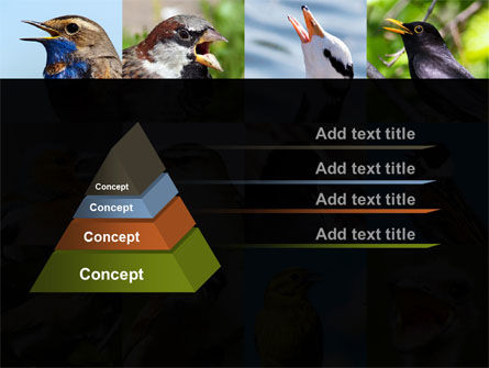 Birds PowerPoint Template Slide 12