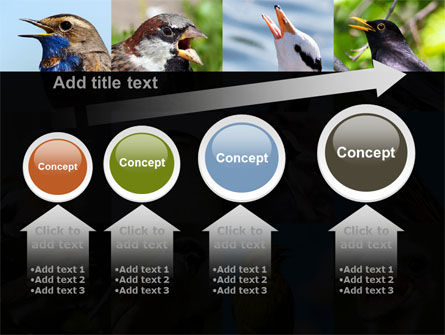 Birds PowerPoint Template Slide 13
