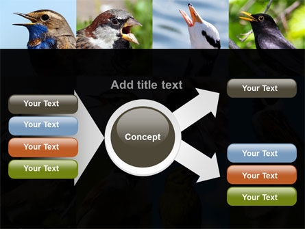 Birds PowerPoint Template Slide 14