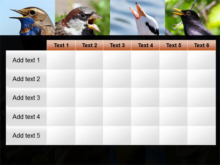 Birds PowerPoint Template Slide 15