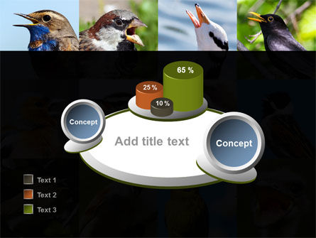 Birds PowerPoint Template Slide 16
