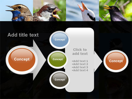 Birds PowerPoint Template Slide 17