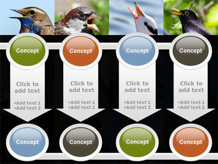 Birds PowerPoint Template Slide 18