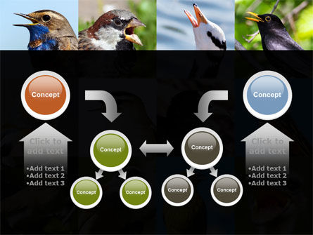 Birds PowerPoint Template Slide 19