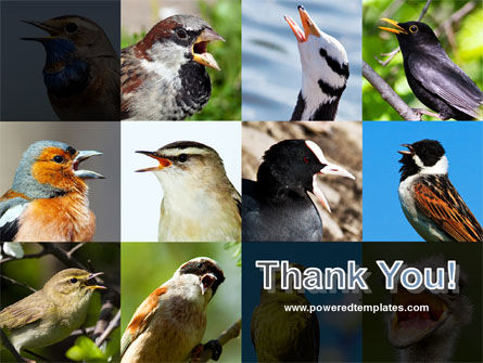 Birds PowerPoint Template Slide 20