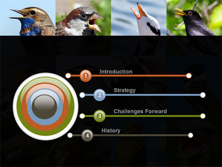 Birds PowerPoint Template, Slide 3, 10528, Education & Training — PoweredTemplate.com