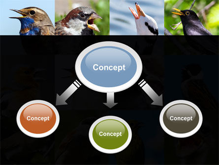 Birds PowerPoint Template, Slide 4, 10528, Education & Training — PoweredTemplate.com