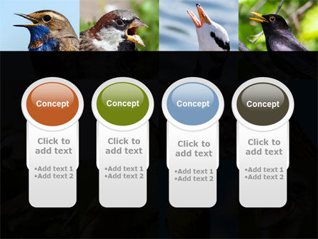 Birds PowerPoint Template Slide 5