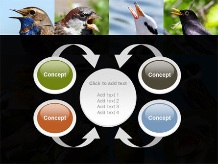 Birds PowerPoint Template Slide 6
