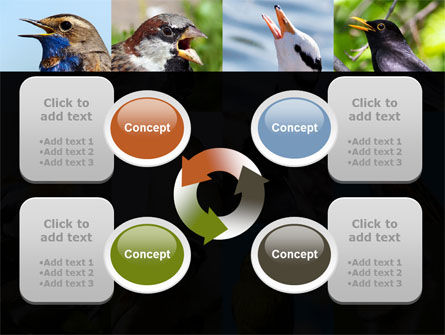 Birds PowerPoint Template Slide 9