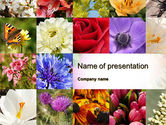 Careers/Industry: Variety of Flowers PowerPoint Template #10597