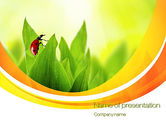 Nature & Environment: Ladybug on Grass PowerPoint Template #10670