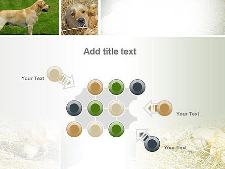 Labrador PowerPoint Template Slide 10