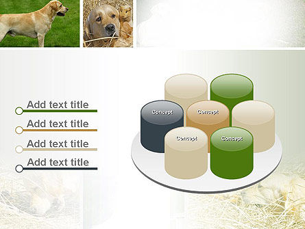 Labrador PowerPoint Template Slide 12