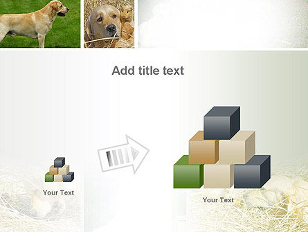 Labrador PowerPoint Template Slide 13