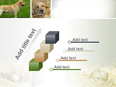 Labrador PowerPoint Template Slide 14
