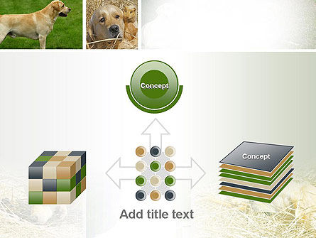 Labrador PowerPoint Template Slide 19
