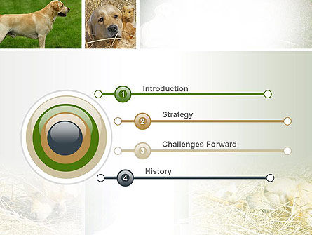 Labrador PowerPoint Template Slide 3