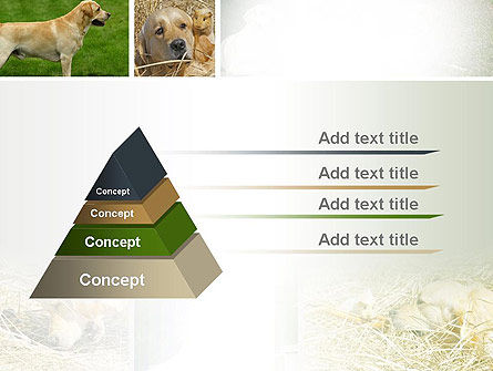 Labrador PowerPoint Template Slide 4