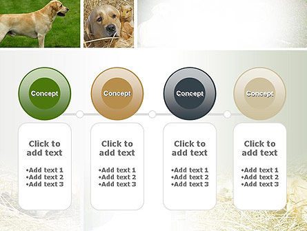 Labrador PowerPoint Template Slide 5
