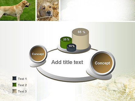Labrador PowerPoint Template Slide 6