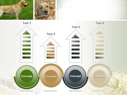 Labrador PowerPoint Template Slide 7