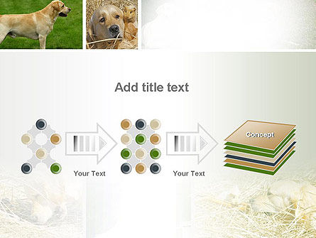 Labrador PowerPoint Template Slide 9