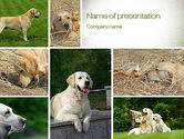 General: Labrador PowerPoint Template #10766