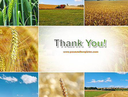 Wheat Cultivation PowerPoint Template Slide 20