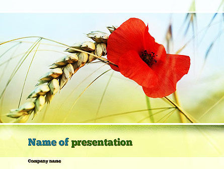 Poppy in Wheat PowerPoint Template, 10953, Agriculture — PoweredTemplate.com