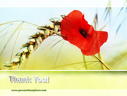 Poppy in Wheat PowerPoint Template Slide 20