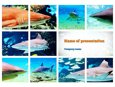 Nature & Environment: Haaien PowerPoint Template #10964