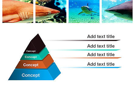 Sharks PowerPoint Template Slide 12