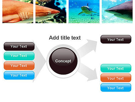 Sharks PowerPoint Template Slide 14