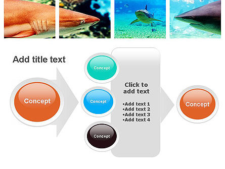 Sharks PowerPoint Template Slide 17