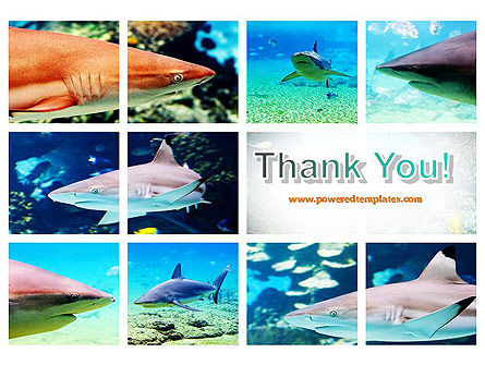 Sharks PowerPoint Template Slide 20