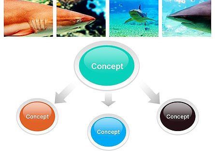 Sharks PowerPoint Template, Slide 4, 10964, Nature & Environment — PoweredTemplate.com