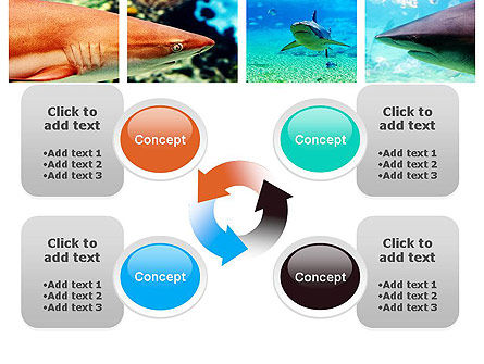 Sharks PowerPoint Template Slide 9