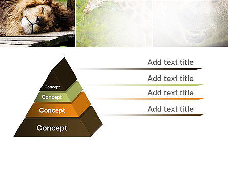 Wild Animals PowerPoint Template Slide 12