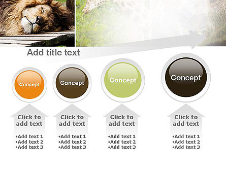 Wild Animals PowerPoint Template Slide 13