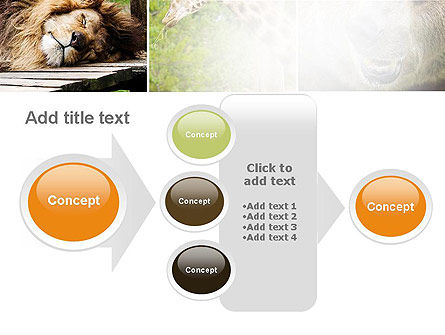 Wild Animals PowerPoint Template Slide 17